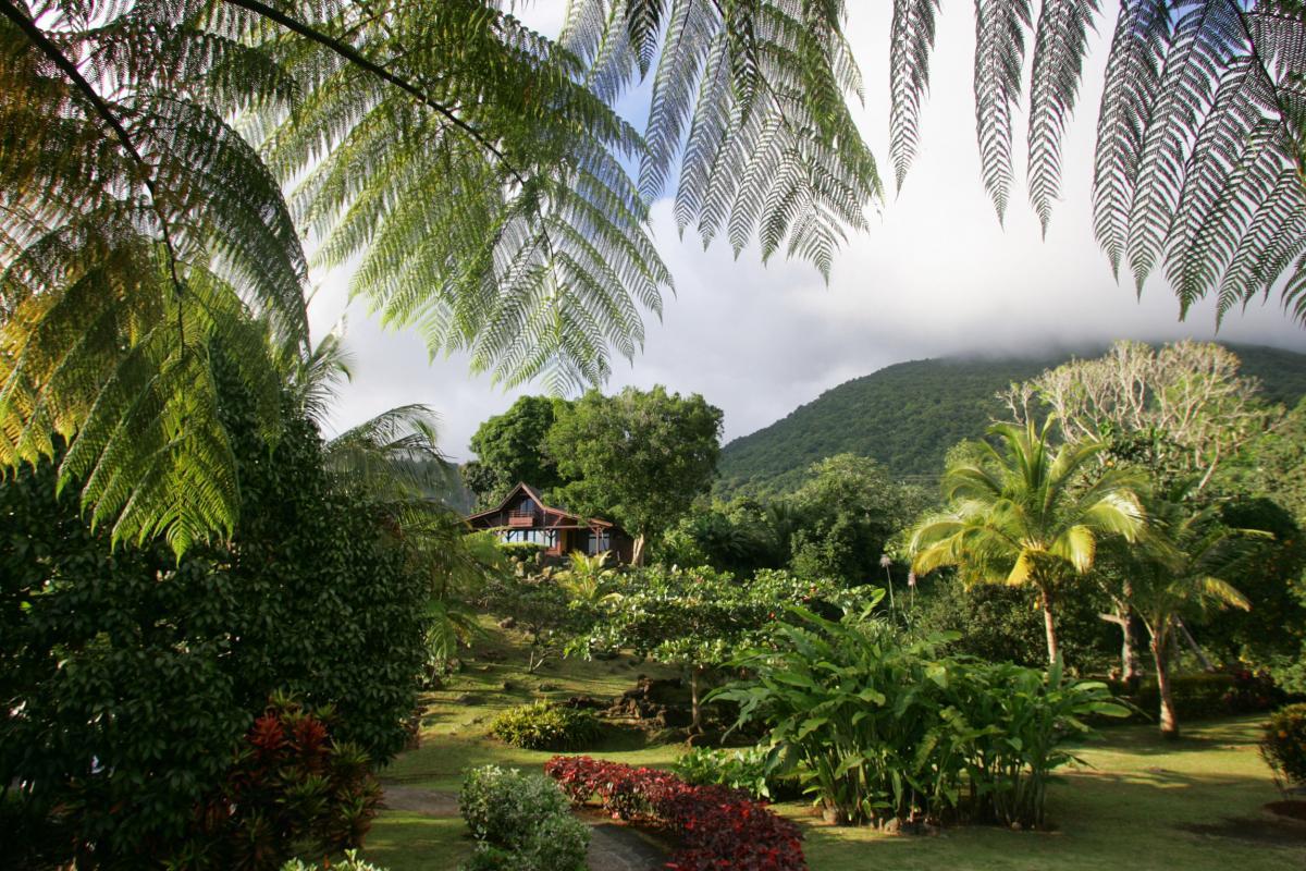 Le Jardin Malanga Guadeloupe - Jardin